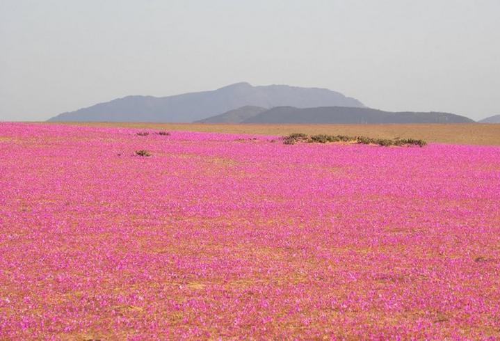 La Box Robe Sinclar : Les Inspirations le désert d'Atacama